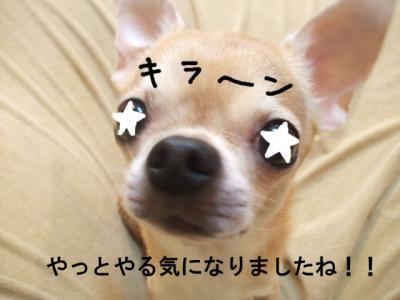 20-1_20090523091514.jpg