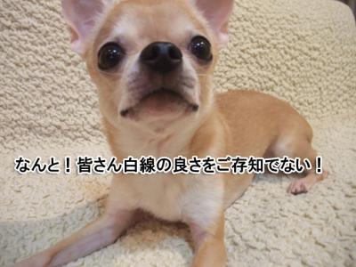 2DSCF7081.jpg