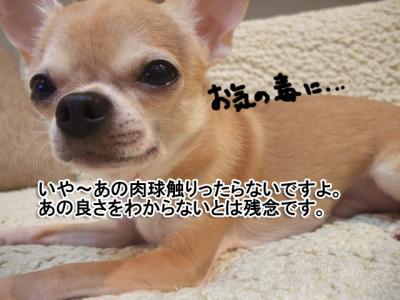 3DSCF7087.jpg