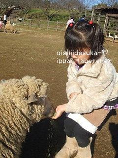 羊vs1号ちゃん