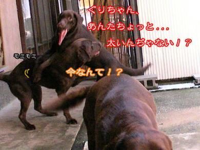 4_20080919211228.jpg