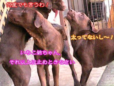 6_20080919211305.jpg