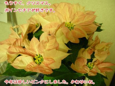 SANY0200_20081203231509.jpg