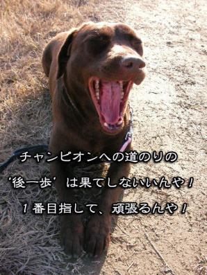 SANY0281_20081214205746.jpg