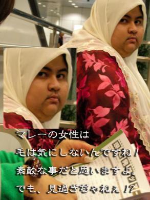SANY0326_20080913220210.jpg