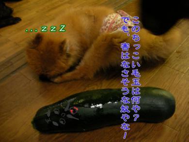 SANY0402.jpg
