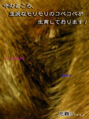 SANY0734.jpg