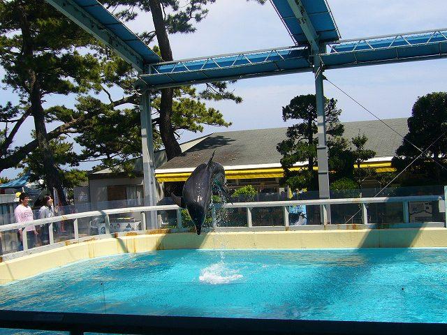 海豚ショー