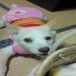 NEC_0067_convert_20080629142327.jpg