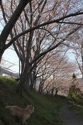 20120407012.jpg