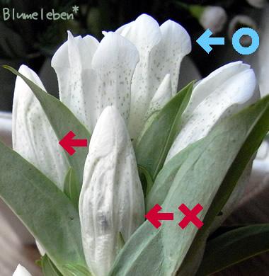 咲く花と終わった花比較