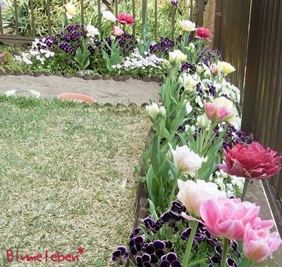 花壇にはチューリップ