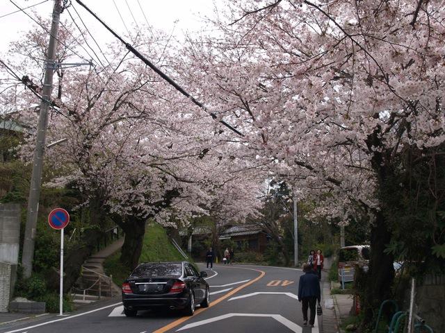 鎌倉山桜20090405