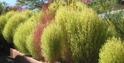 庭の放棄草