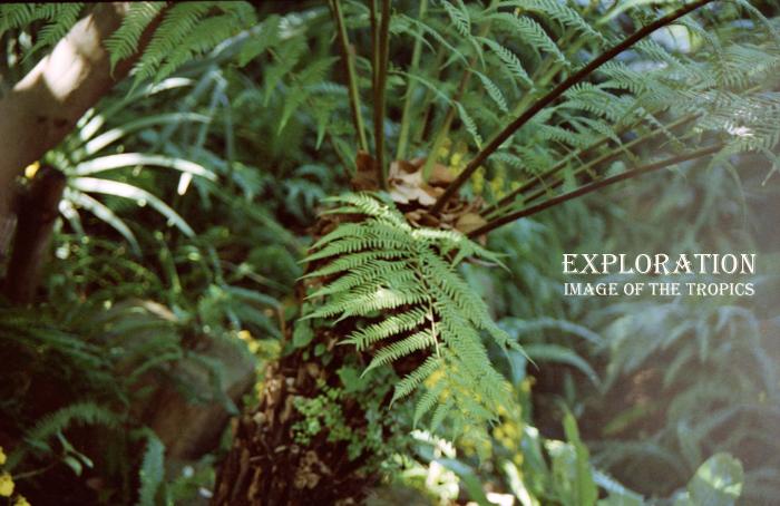 Exploration6.jpg