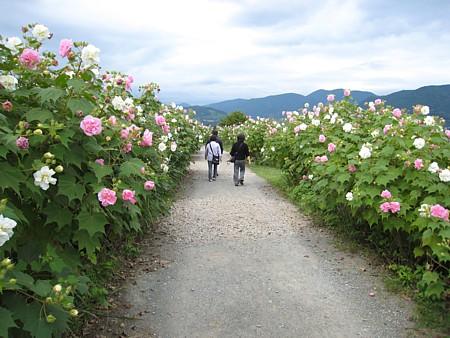 2008092804.jpg