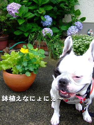 nana畑