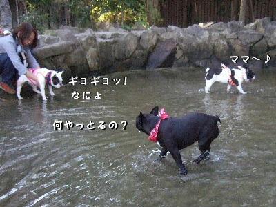 無理に?入水