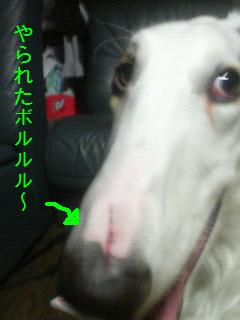 200803102229000.jpg