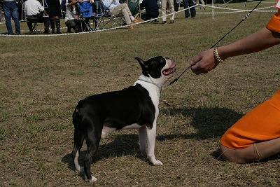 20111008dogshow