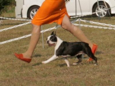 20111008dogshow25