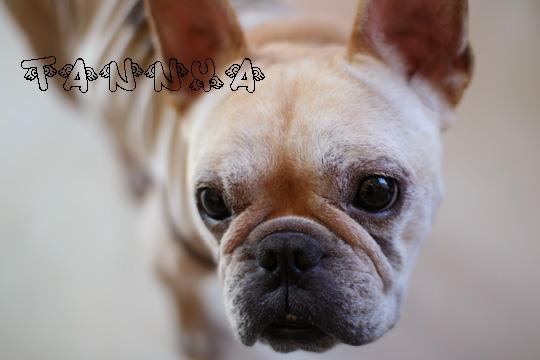 SUPPA犬タンニャ