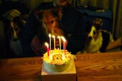 cake2_20090217165205.jpg