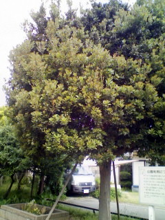 謎の木全貌