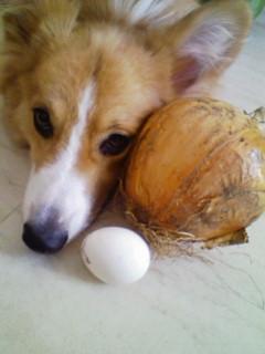 卵とぶーと比べてみた