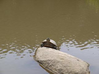 亀もひなたぼっこ
