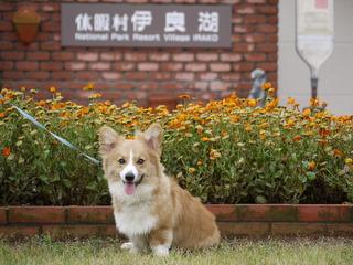 休暇村伊良湖の看板犬もやります