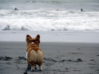静岡の海にただずむ