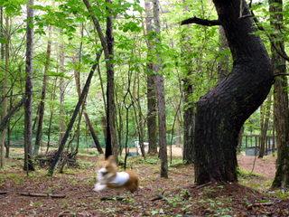 森を駆け抜ける。