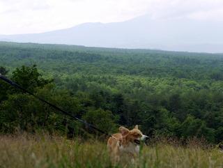 浅間牧場の丘。