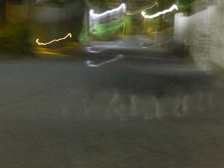 闇夜のネコ