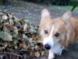 秋の気配も感じます。