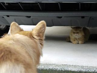 ネコの方がオトナ。