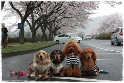 富士霊園1-horz