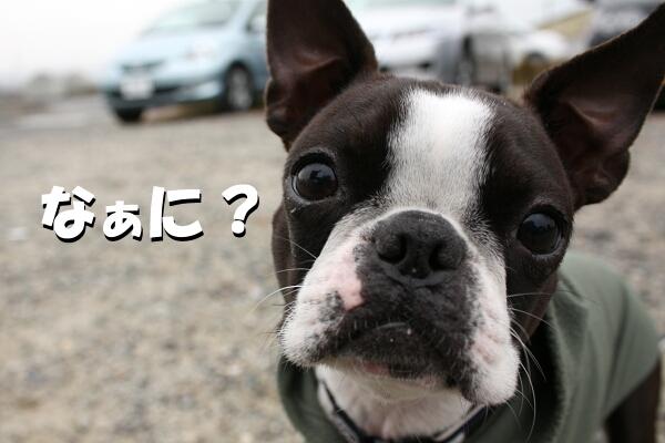 リンちゃん『?』
