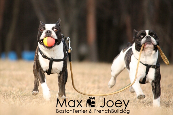 MAX&JOEY