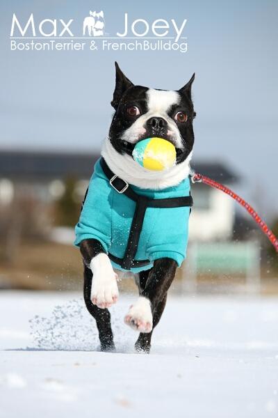 雪上でも、ボールは欠かせないズラ~