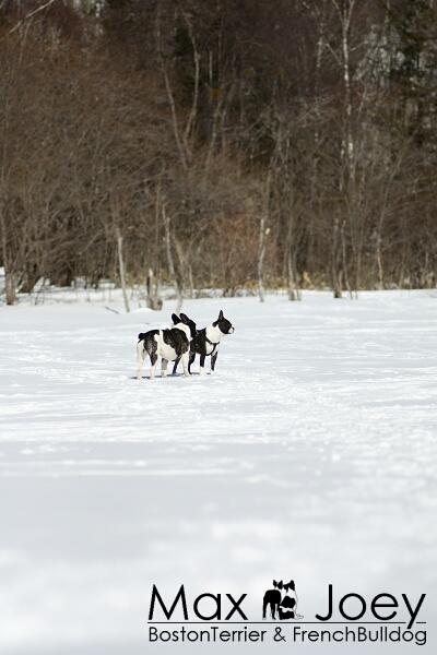 氷の張った湖の上です