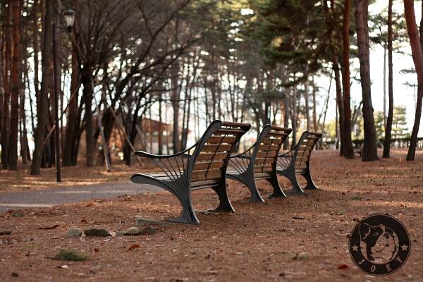 木漏れ日とベンチ