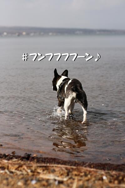 水遊びをネ