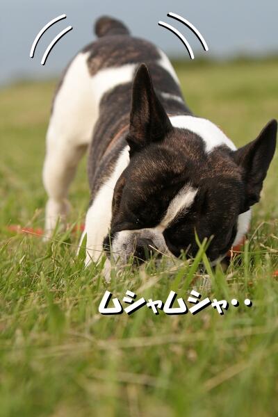お尻が・・・( ´艸`)