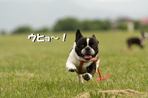 飛ぶジョーーー!