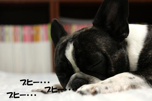 犯人は、眠る