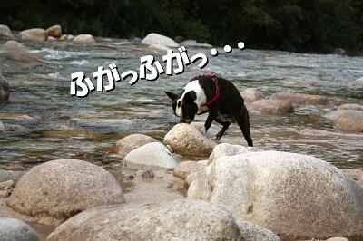 コッ・・・コレは、魚の干物?!