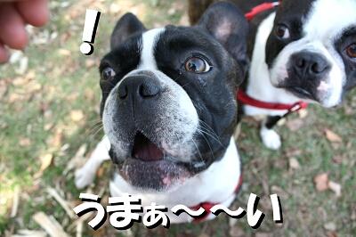 コッ・・・コレは!?