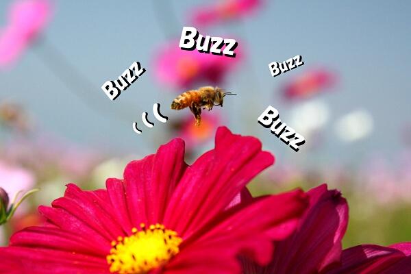 ぶん!ぶん!ぶん!ハチが飛ぶ~!